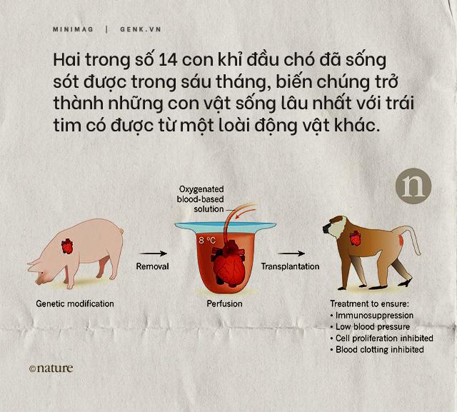 Đọc cuối tuần: Nội tạng từ những con lợn không tên sẽ cứu sống hàng ngàn bệnh nhân tuyệt vọng - Ảnh 11.