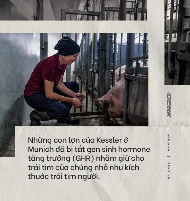 Đọc cuối tuần: Nội tạng từ những con lợn không tên sẽ cứu sống hàng ngàn bệnh nhân tuyệt vọng - Ảnh 12.