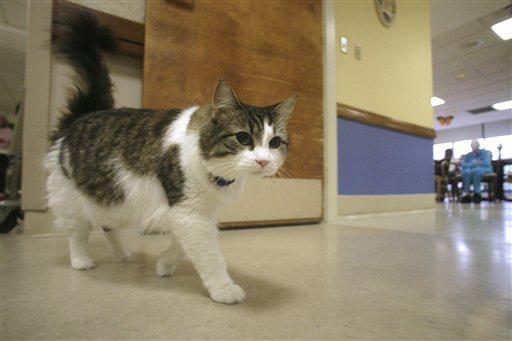 Oscar: Chú mèo báo tử dự đoán đúng hơn 100 cái chết, được cả tạp chí y khoa nổi tiếng ghi nhận khả năng đặc biệt - Ảnh 2.