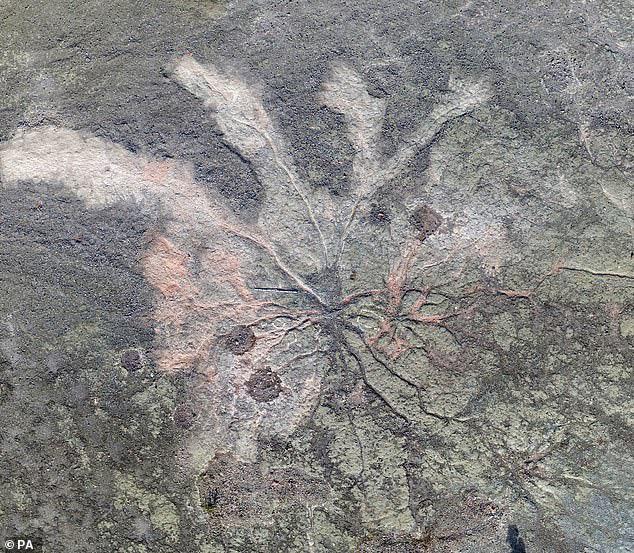 Các nhà khoa học phát hiện khu rừng cổ đại lâu đời nhất trong lịch sử Trái Đất, cách chúng ta 385 triệu năm - Ảnh 2.