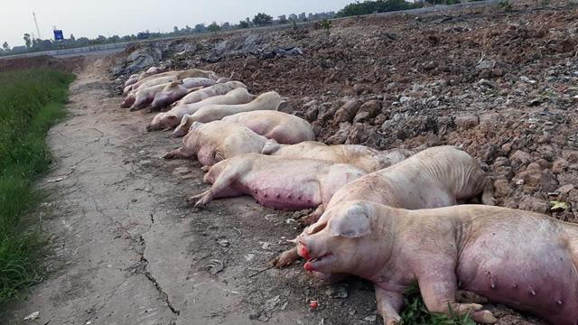 Khủng hoảng chưa từng có, 10 tỷ USD lung lay, triệu dân Việt lo sợ - Ảnh 2.