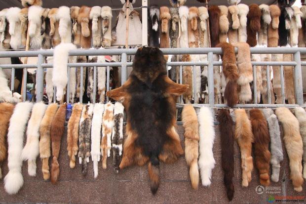 Nở rộ ngành công nghiệp lông mèo tàn bạo tại Trung Quốc khiến hàng trăm nghìn người yêu động vật thế giới xót xa - Ảnh 1.