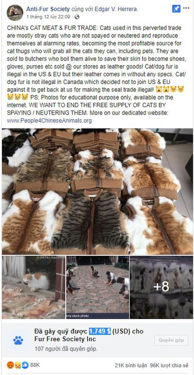 Nở rộ ngành công nghiệp lông mèo tàn bạo tại Trung Quốc khiến hàng trăm nghìn người yêu động vật thế giới xót xa - Ảnh 5.