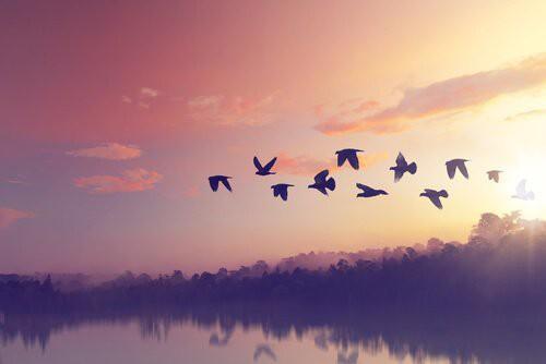 Câu chuyện về loài chim Toh: Bài học về sự khiêm nhường - đức tính của những người tự hạ mình nhưng không hề tầm thường - Ảnh 2.