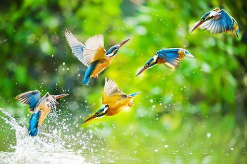 Câu chuyện về loài chim Toh: Bài học về sự khiêm nhường - đức tính của những người tự hạ mình nhưng không hề tầm thường - Ảnh 1.