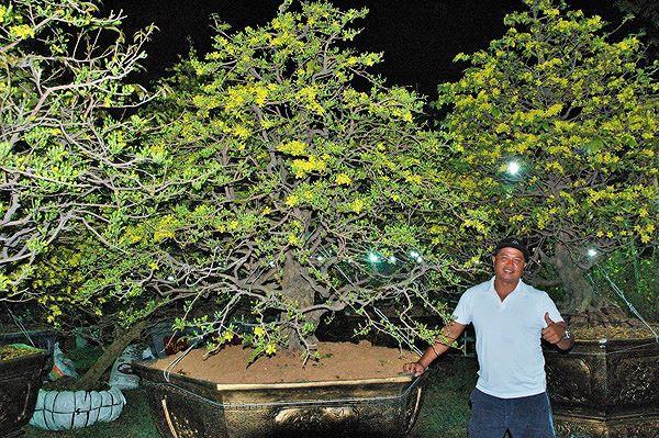 Sững sờ trước những cây mai tiền tỷ ở chợ hoa đêm - Ảnh 1.