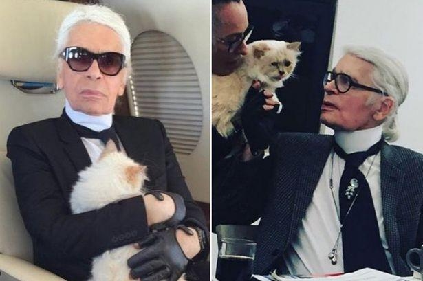 Cuộc sống vương giả của mèo Choupette - tình yêu lớn nhất đời Karl Lagerfeld - Ảnh 14.
