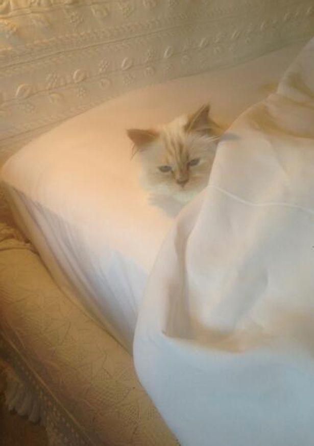 Cuộc sống vương giả của mèo Choupette - tình yêu lớn nhất đời Karl Lagerfeld - Ảnh 8.