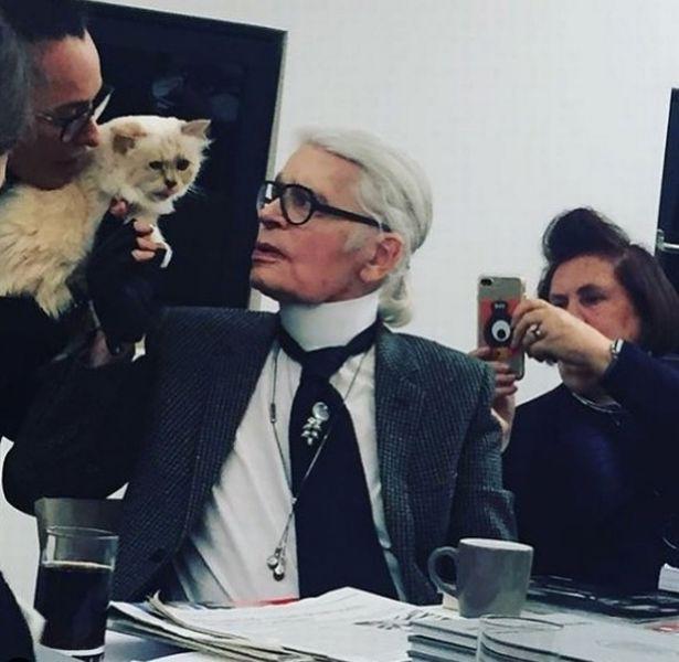 Cuộc sống vương giả của mèo Choupette - tình yêu lớn nhất đời Karl Lagerfeld - Ảnh 10.