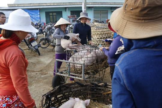 Nghề độc ở chợ heo lớn nhất Quảng Nam - Ảnh 12.