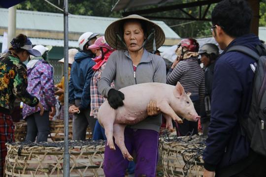 Nghề độc ở chợ heo lớn nhất Quảng Nam - Ảnh 16.