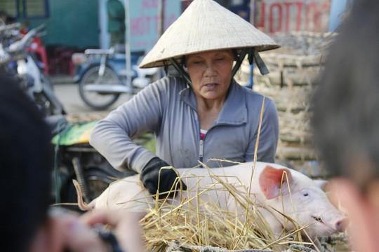 Nghề độc ở chợ heo lớn nhất Quảng Nam - Ảnh 18.