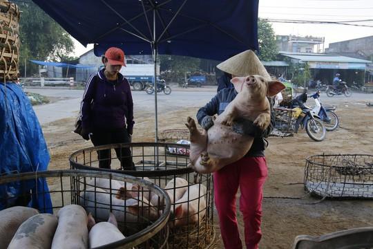 Nghề độc ở chợ heo lớn nhất Quảng Nam - Ảnh 20.
