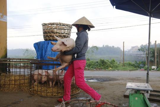 Nghề độc ở chợ heo lớn nhất Quảng Nam - Ảnh 21.