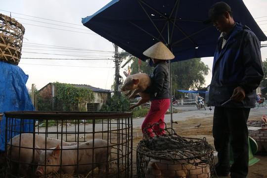Nghề độc ở chợ heo lớn nhất Quảng Nam - Ảnh 24.
