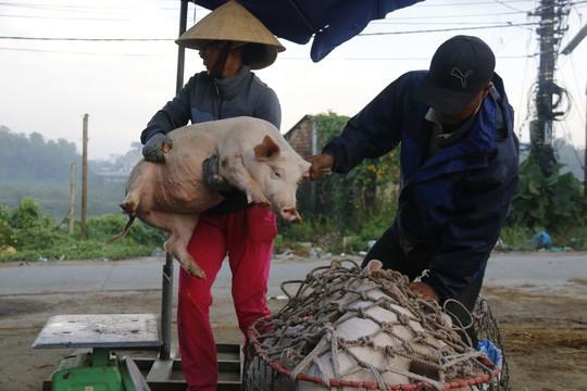 Nghề độc ở chợ heo lớn nhất Quảng Nam - Ảnh 26.