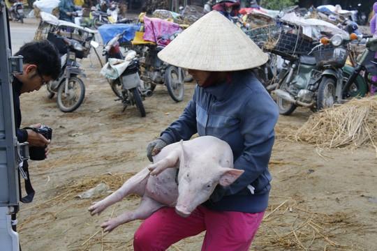 Nghề độc ở chợ heo lớn nhất Quảng Nam - Ảnh 27.