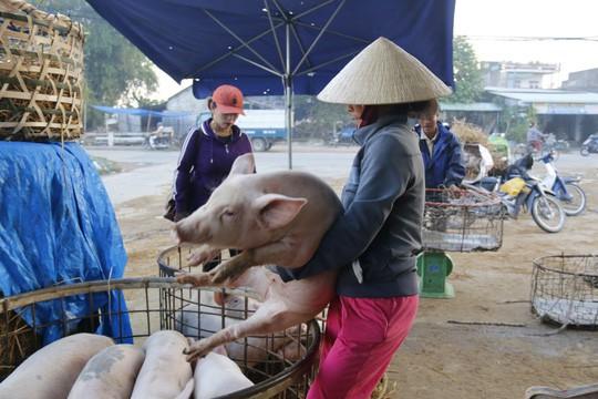 Nghề độc ở chợ heo lớn nhất Quảng Nam - Ảnh 28.