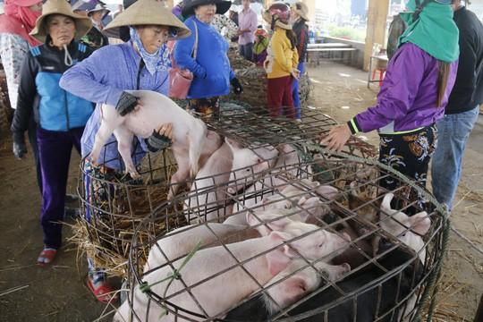 Nghề độc ở chợ heo lớn nhất Quảng Nam - Ảnh 31.