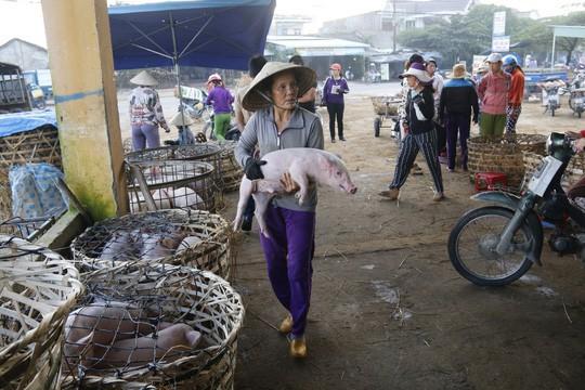 Nghề độc ở chợ heo lớn nhất Quảng Nam - Ảnh 9.
