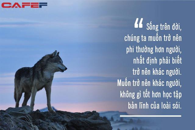 Muốn bản lĩnh HƠN người thì nhất định phải học cách KHÁC người, đừng ngại biến bản thân thành sói: Hung dữ nhưng trung thành, liều lĩnh nhưng khôn ngoan! - Ảnh 1.