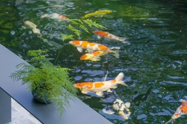 Cuộc sống an yên của người đàn ông độc thân trong ngôi nhà ngoại ô rộng 1000m² với thú vui uống trà, nuôi cá  - Ảnh 9.