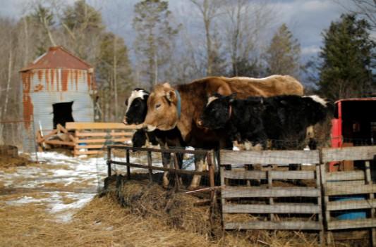 Bí ẩn vụ sữa nhiễm bẩn khiến trang trại ba đời ở Mỹ đối mặt nguy cơ phá sản - Ảnh 1.