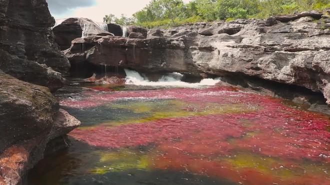 """caño cristales - photo 1 1553946046847645153907 - Đây là con sông đẹp nhất thế giới: Lung linh 5 màu sắc, được mệnh danh là """"cầu vồng sống"""" vi diệu nhất"""