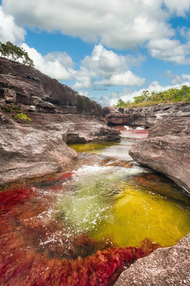 """caño cristales - photo 12 15539460499491250064566 - Đây là con sông đẹp nhất thế giới: Lung linh 5 màu sắc, được mệnh danh là """"cầu vồng sống"""" vi diệu nhất"""