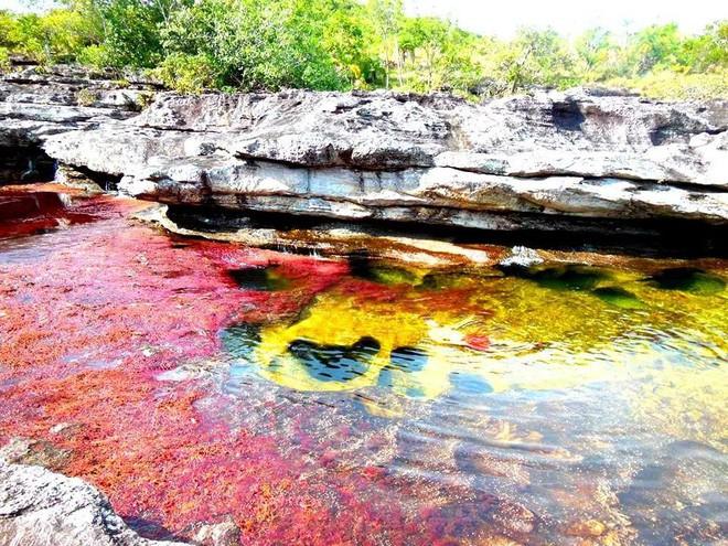 """caño cristales - photo 13 15539460499511814751997 - Đây là con sông đẹp nhất thế giới: Lung linh 5 màu sắc, được mệnh danh là """"cầu vồng sống"""" vi diệu nhất"""