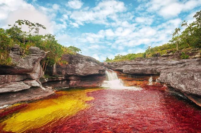 """caño cristales - photo 3 1553946049936451480837 - Đây là con sông đẹp nhất thế giới: Lung linh 5 màu sắc, được mệnh danh là """"cầu vồng sống"""" vi diệu nhất"""