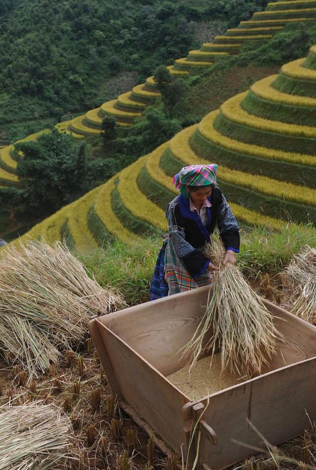 Đường dây bán những cô gái Việt sang Trung Quốc làm vợ lên báo nước ngoài - Ảnh 1.