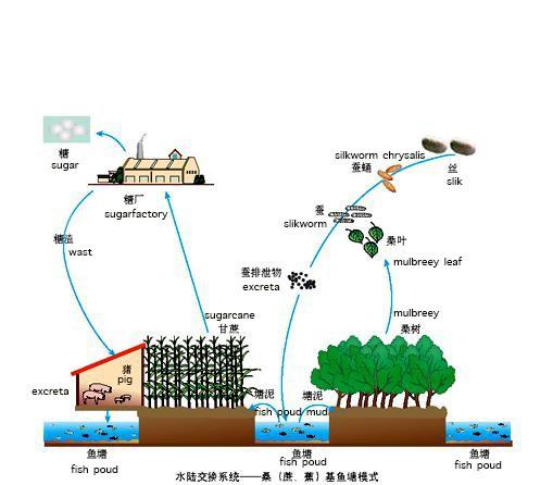 Trung Quốc đang nuôi hơn 1,4 tỷ dân của mình như thế nào? (Phần 1) - Ảnh 11.