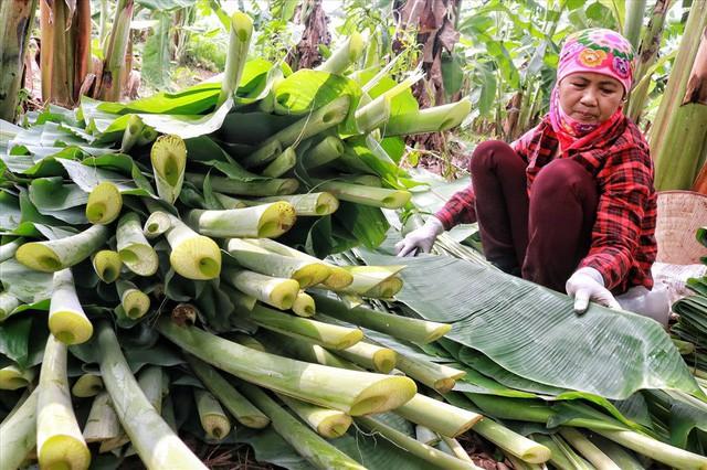 Lá chuối thay nilon, người dân kiếm bạc triệu từ nghề chặt lá chuối - Ảnh 4.