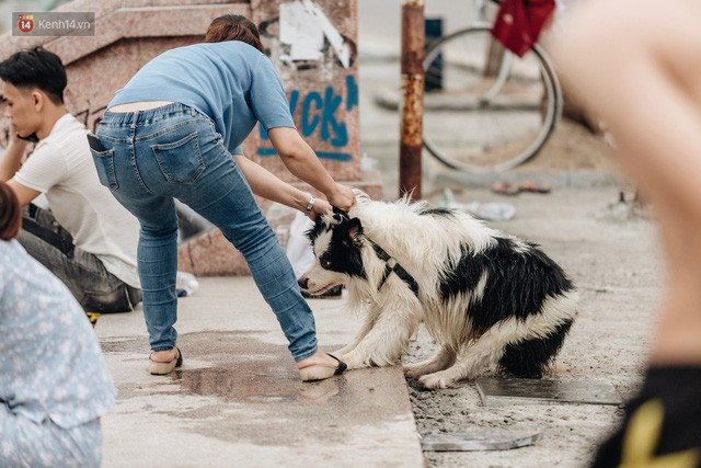 Hà Nội oi nóng ngộp thở, nhiều người mang theo cả thú cưng ra Hồ Tây tắm bất chấp biển cấm - Ảnh 22.