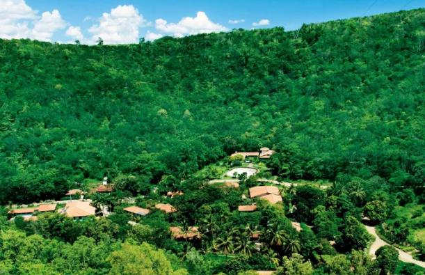 Vợ chồng nhiếp ảnh gia Brazil trồng 2 triệu cây xanh trong suốt 20 năm để hồi sinh khu rừng bị tàn phá, hàng trăm loài động vật lũ lượt kéo về sinh sống - Ảnh 7.