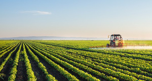 Thế giới chi 1.000 tỉ USD/năm cho nhu cầu rau-củ-quả, Việt Nam vẫn chưa tận dụng được thế mạnh, Bí thư Thành ủy TP.HCM Nguyễn Thiện Nhân đã hiến kế như thế nào ? - Ảnh 1.