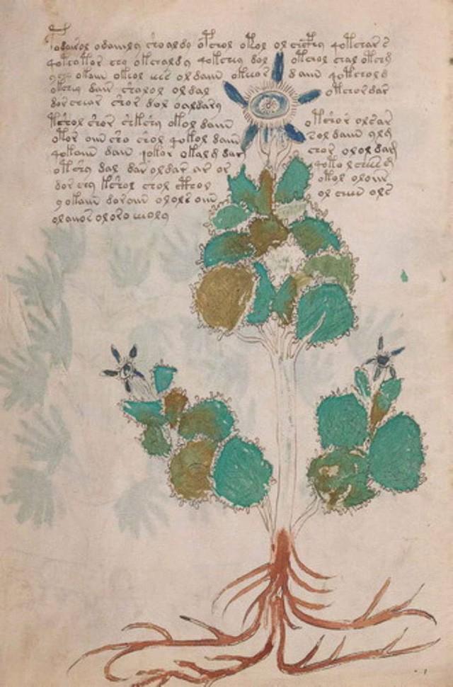 Cuốn sách bí ẩn nhất lịch sử đã hành hạ nhân loại suốt 600 năm, cuối cùng được giải mã trong... 2 tuần  - Ảnh 2.