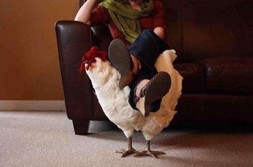 Người Mỹ đang chi cả nghìn USD mua gà về gác chân nhưng PETA không ý kiến gì - Ảnh 1.