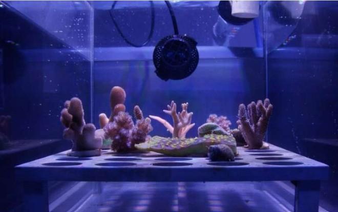 """sáng chế cực kì ấn tượng - photo 4 155926999551051229589 - 10 sáng chế đỉnh cao đang góp phần """"cứu rỗi"""" đại dương, cái số 3 được tạo ra bởi một cô bé mới học lớp 6!"""