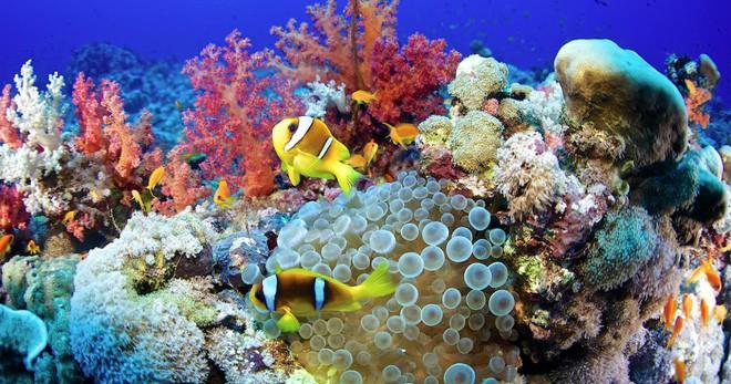 """sáng chế cực kì ấn tượng - photo 6 1559269995523965350320 - 10 sáng chế đỉnh cao đang góp phần """"cứu rỗi"""" đại dương, cái số 3 được tạo ra bởi một cô bé mới học lớp 6!"""