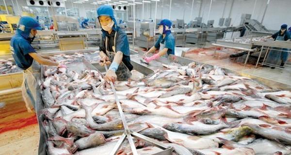 Các ông vua thủy sản liên tiếp gặp khó: Vua tôm Minh Phú bị cáo buộc tránh thuế, Vua cá Hùng Vương kinh doanh trục trặc - Ảnh 1.