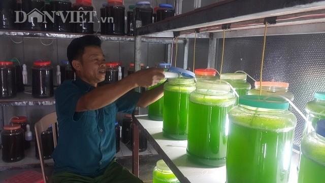 Chuyện lạ Thái Bình, chế ngàn lít nước xanh lè, rót bán hàng tỷ đồng - Ảnh 3.