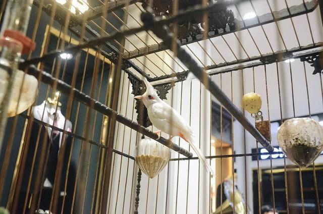 Gặp ông trùm thời trang với bộ sưu tập chim khủng 10 tỷ đồng: Chim nằm điều hòa, có camera an ninh và hai nhân viên chăm sóc đặc biệt - Ảnh 3.