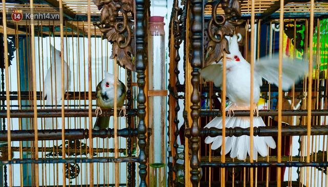 Gặp ông trùm thời trang với bộ sưu tập chim khủng 10 tỷ đồng: Chim nằm điều hòa, có camera an ninh và hai nhân viên chăm sóc đặc biệt - Ảnh 12.