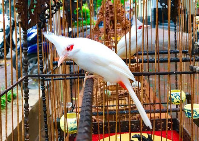 Gặp ông trùm thời trang với bộ sưu tập chim khủng 10 tỷ đồng: Chim nằm điều hòa, có camera an ninh và hai nhân viên chăm sóc đặc biệt - Ảnh 8.