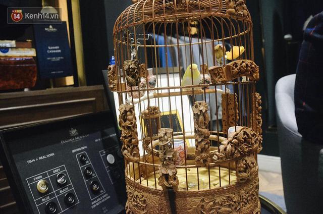 Gặp ông trùm thời trang với bộ sưu tập chim khủng 10 tỷ đồng: Chim nằm điều hòa, có camera an ninh và hai nhân viên chăm sóc đặc biệt - Ảnh 9.
