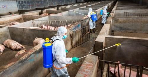 Giá thịt lợn tại Trung Quốc có thể tăng đến 70% tiềm ẩn khả năng lạm phát tồi tệ - Ảnh 1.