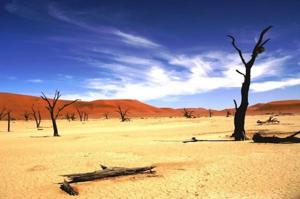 Cùng vượt sa mạc, 1 đoàn chết hết, 1 đoàn sống sót lại kiếm được tiền: Lý do rất đáng ngẫm - Ảnh 2.