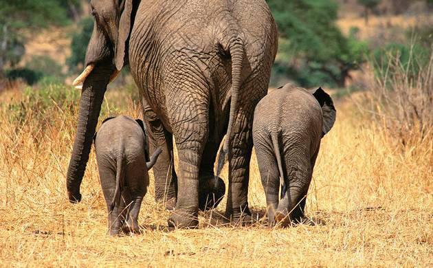 To như voi hay nhỏ như mèo, tất cả động vật đều đại tiện trong 12 giây: Tại sao lại có nghịch lý vậy? - Ảnh 1.